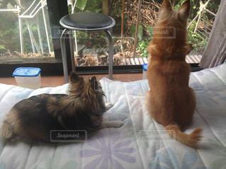 窓の前に座っている猫の写真・画像素材[1785728]