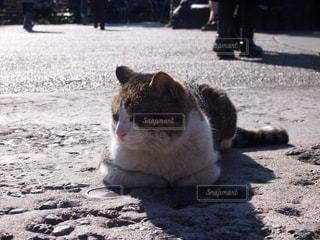 猫の写真・画像素材[239034]