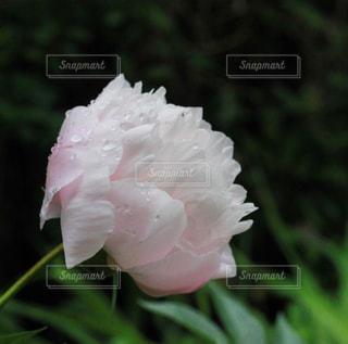 花のクローズアップの写真・画像素材[2187587]