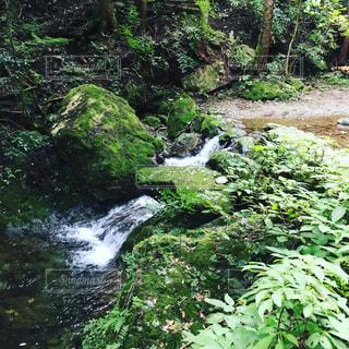 森の中の滝の写真・画像素材[802114]