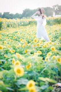 近くのお花畑 - No.901316