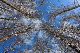 フォレスト内のツリーの写真・画像素材[1111913]