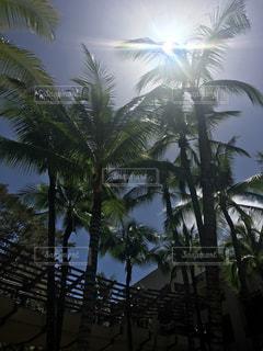 太陽の写真・画像素材[699999]