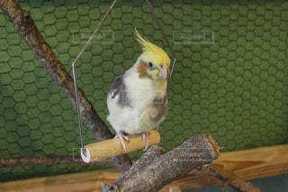 小さな鳥のケージの上に座っての写真・画像素材[737353]