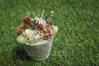 フィールドの花カップの写真・画像素材[953104]