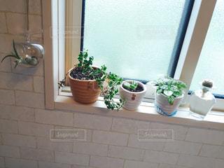 自然,インテリア,白,かわいい,部屋,窓,光,レンガ,オシャレ,壁,サボテン,観葉植物,ナチュラル,多肉植物,エアプランツ