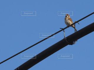 ポールの上に腰掛けて鳥の写真・画像素材[1235149]