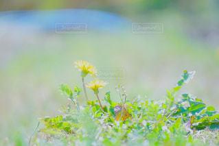 自然の写真・画像素材[598929]