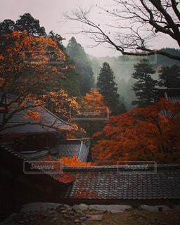 永平寺散策の写真・画像素材[768888]