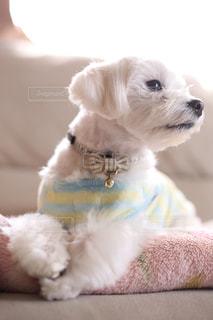 お外に行きたい犬の写真・画像素材[997518]
