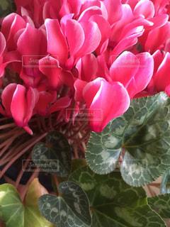 近くの花のアップの写真・画像素材[1451432]