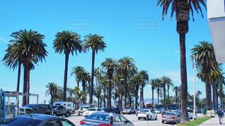 ヤシの木の前に車が並んでいます。の写真・画像素材[1001768]