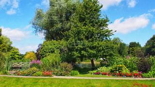 花と緑豊かな庭園の写真・画像素材[1389758]