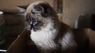 子猫の横顔の写真・画像素材[2292487]