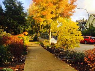 道路の脇に木がある道の写真・画像素材[2515361]