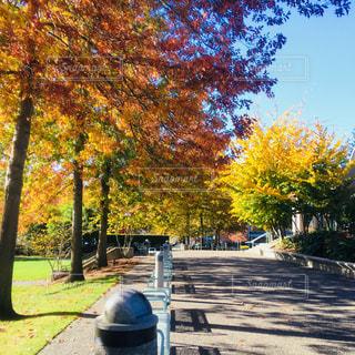 秋の公園の写真・画像素材[2515434]