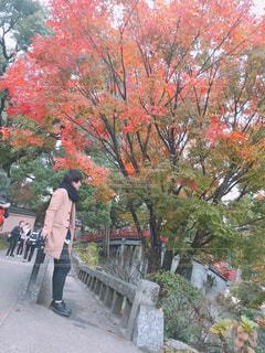 木の隣に立っている人 - No.856389