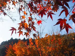 木の赤い花 - No.858342