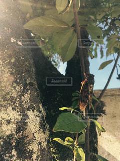昆虫採集の写真・画像素材[641445]