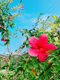 植物の赤い花の写真・画像素材[805562]