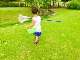 夏,虫取り,男の子,虫かご,あみ,虫とり,緑バック