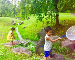 自然,夏,ワンピース,子供,女の子,虫取り,男の子,あみ,虫とり,緑バック