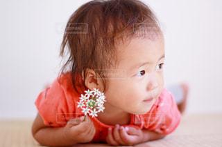 自宅でニラの花撮影の写真・画像素材[1408267]