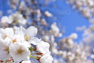 花の写真・画像素材[2057394]