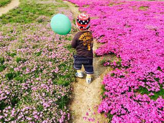花,春,ピンク,後ろ姿,歩く,風船,花びら,お花,子供,バック,人物,背中,道,人,後姿,芝桜,男の子,はなびら,春探し