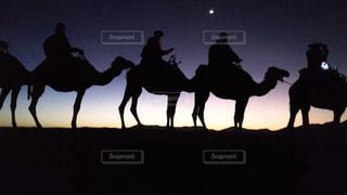 ラクダ砂漠の写真・画像素材[2857865]