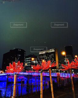 中之島のライトアップの写真・画像素材[1013818]