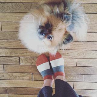 着ぐるみを着た猫の写真・画像素材[721195]