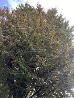 フォレスト内のツリー - No.877923
