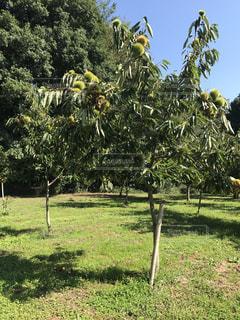 芝生のフィールドのツリーの写真・画像素材[1160301]