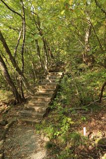 フォレスト内のツリーの写真・画像素材[765894]