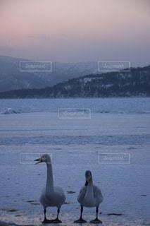 屈斜路湖の写真・画像素材[892180]