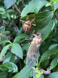 木の枝にとまる小鳥の写真・画像素材[1428889]