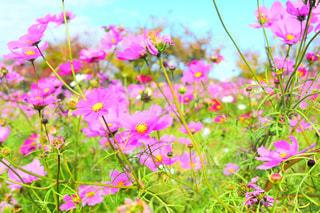 植物にピンクの花の写真・画像素材[885691]