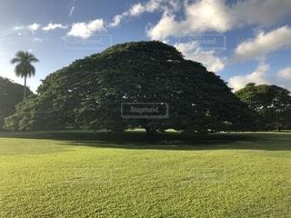 観光,ハワイ,海外旅行,モアナルアガーデン