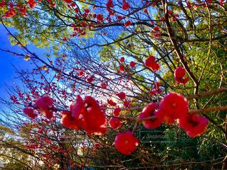 自然,春,花見,ライフスタイル