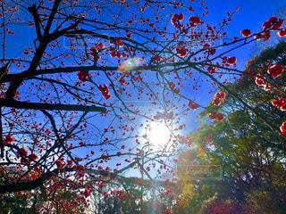 春,屋外,青い空,花見,ライフスタイル