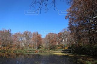 越前大野 刈込池へトレッキングの写真・画像素材[874216]