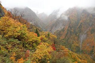 風景,秋,紅葉,石川県,10月,白山白川郷ホワイトロード,白山スーパー林道