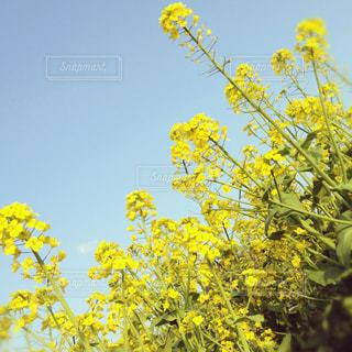 春の写真・画像素材[602587]