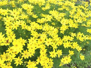 黄色の写真・画像素材[604877]