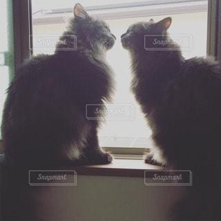 猫の写真・画像素材[38431]