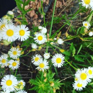 花の写真・画像素材[607071]