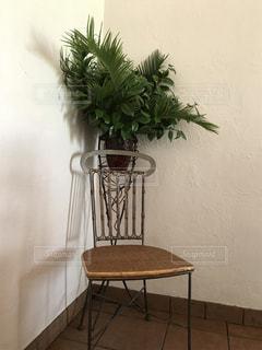 自然,インテリア,花,木,緑,部屋,いす,美味しい