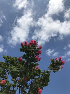 夏の空 雲 たくましく美しい花の写真・画像素材[711375]
