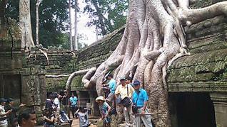 木の隣に立っている人のグループの写真・画像素材[796954]